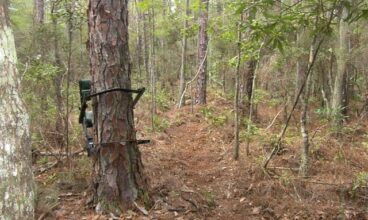 20-point Tree Stand Safety Checklist