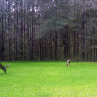 Food Plot Fertilizer