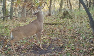 How to Hunt Scent Free