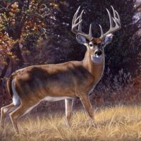 How to Hunt for a Trophy Buck