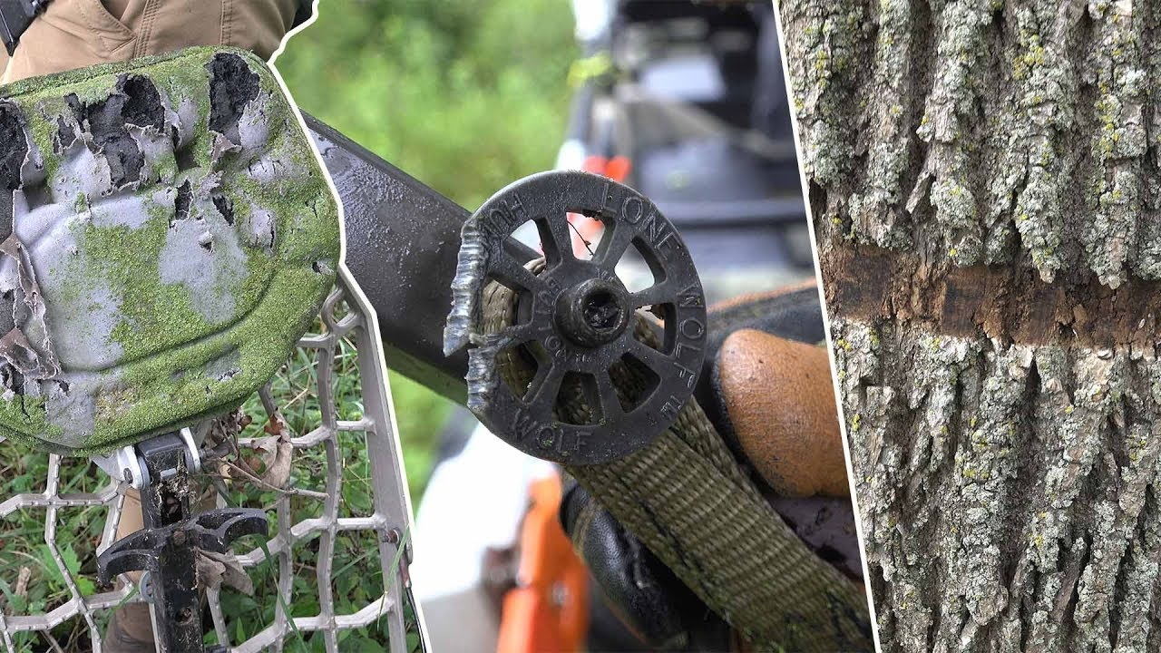 Tree Stand Maintenance