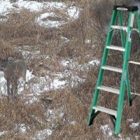 Tree Stand Portable Ladders