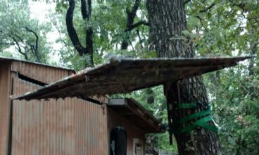 Tree Stand Roof