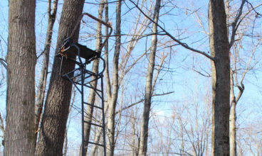 Tree Stand Safety