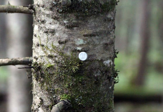 Tree Stand Trail Reflector Markers