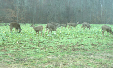 Winter Food Plots